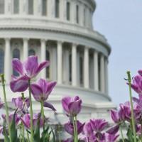 Capitol Flowers e1441670195253